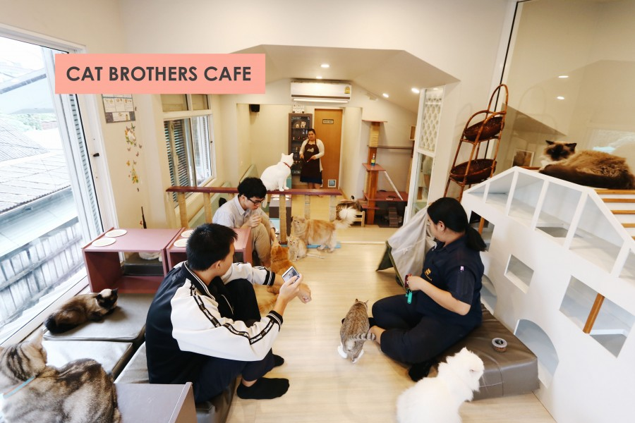 50 cat brothers cafe