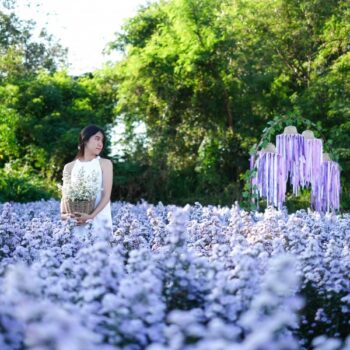 5 พิกัด สวนดอกไม้ ' เชียงใหม่ ' น่าไปถ่ายรูป